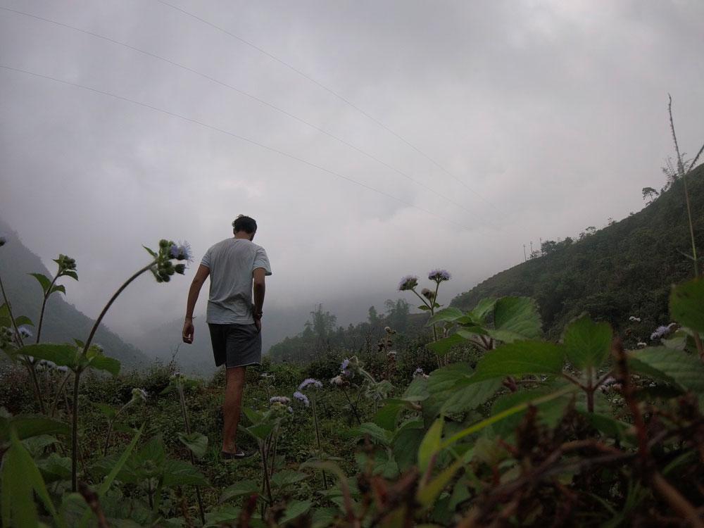 Les fleurs à Sapa