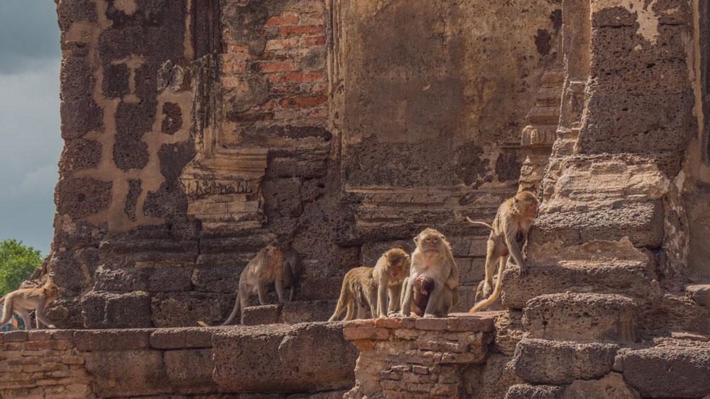 Les singes de Lopburi